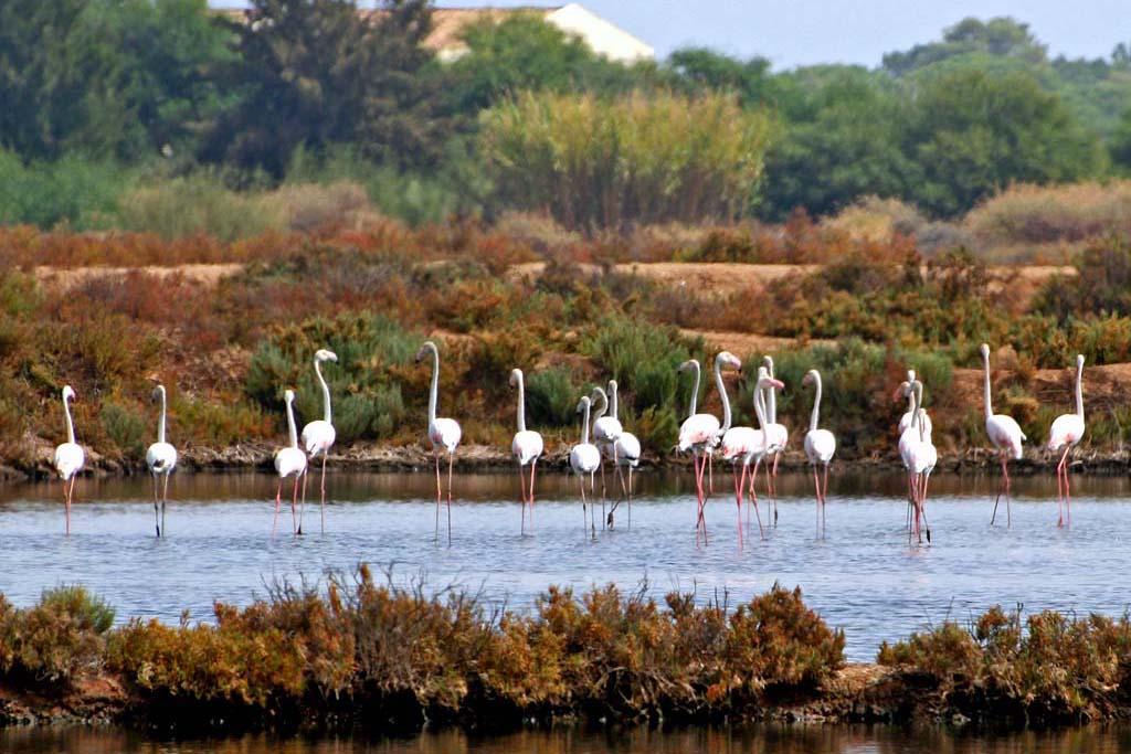 Flamingos Salgados