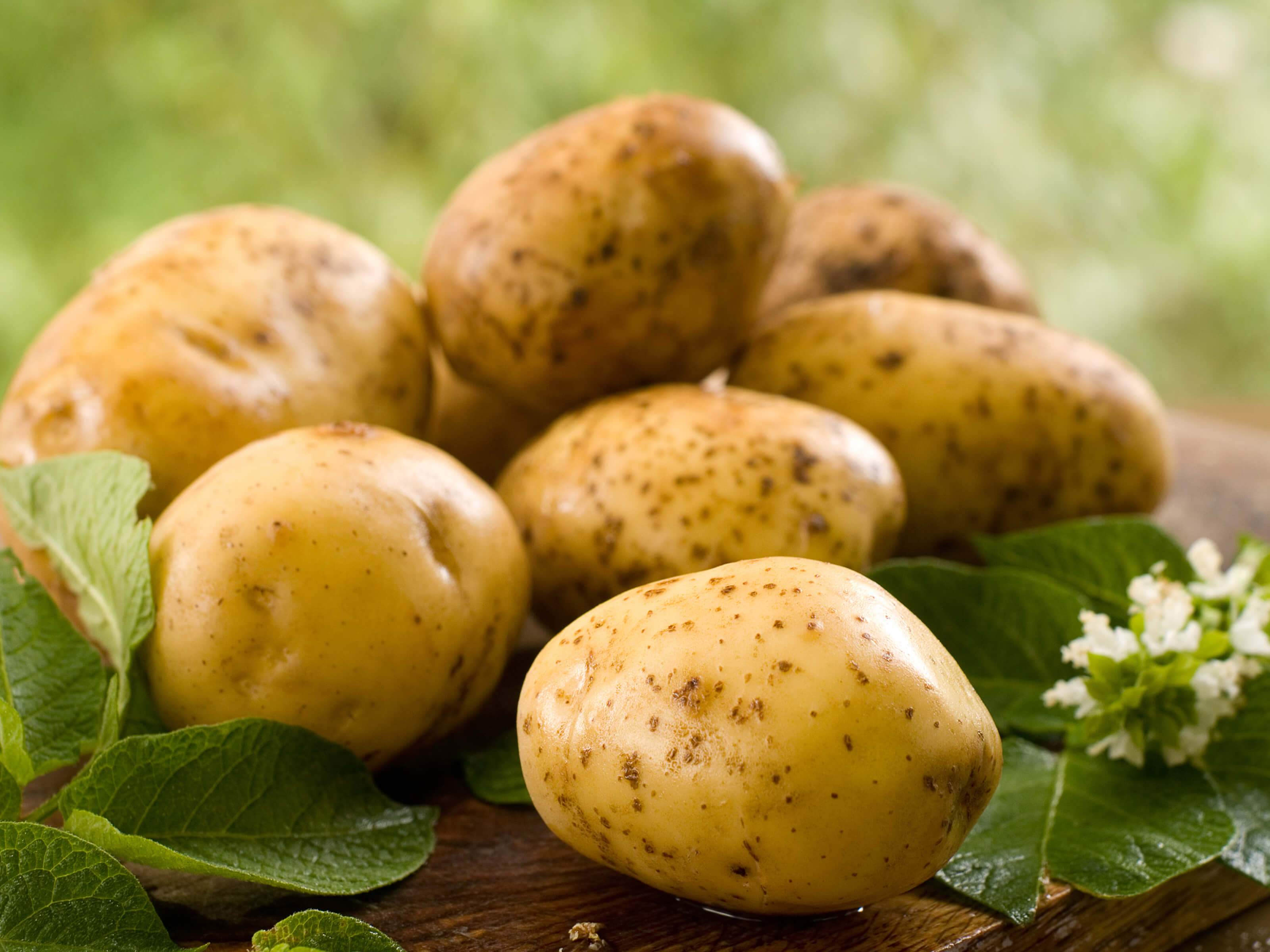 Verse aardappelen