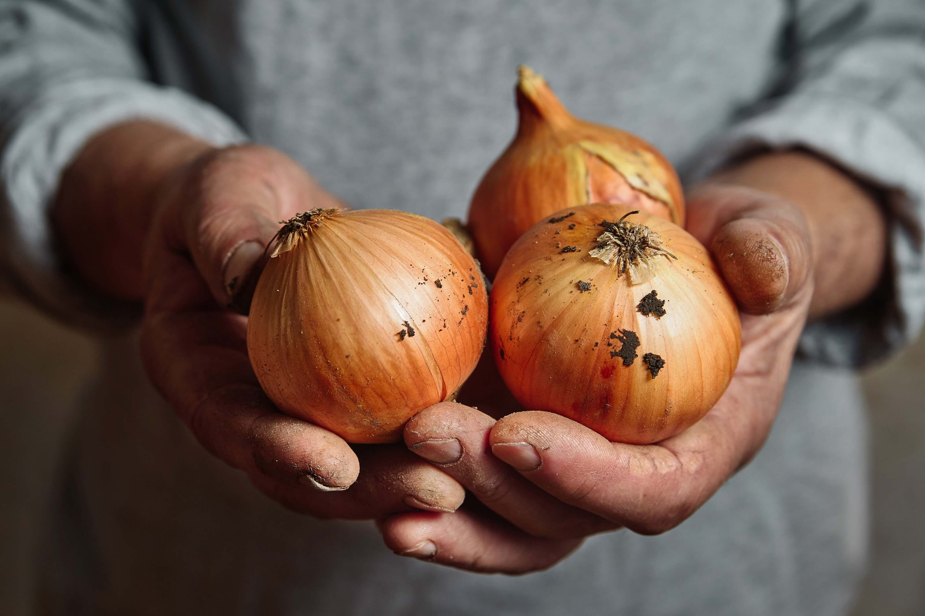 Westhoeve Potatoes uien in handen van boer
