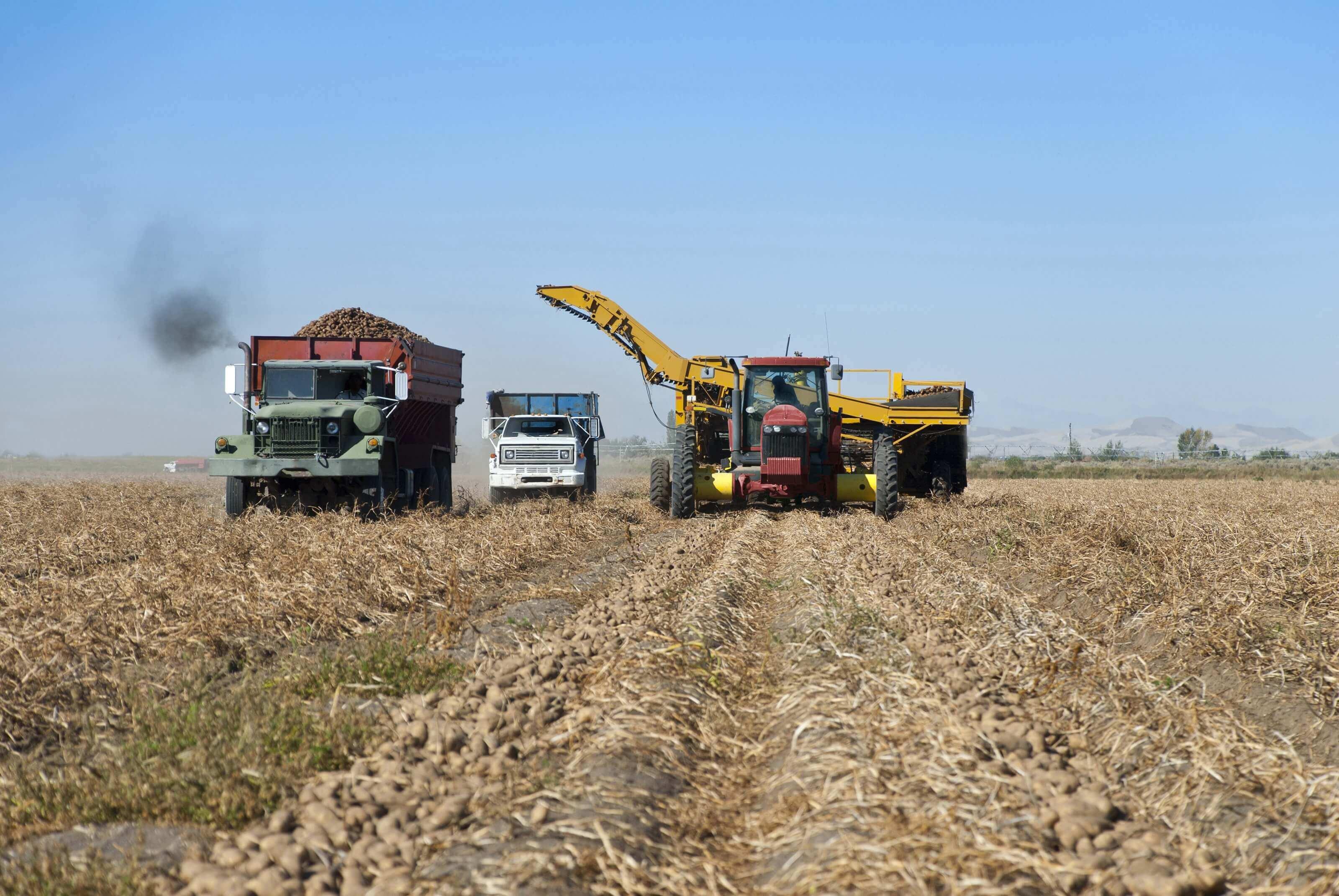 Aardappelen oogsten met tractor